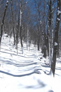 A snowy Summit Trail. (Photo courtesy N.C. State Parks)