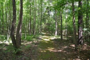 Coleman Trail