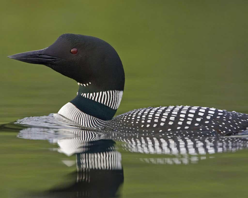 Photo courtesy Audubon.org