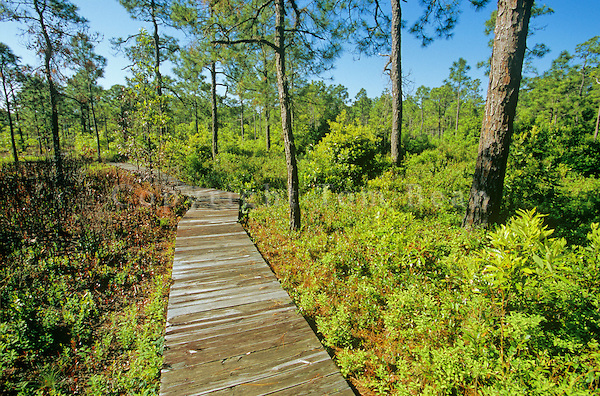 Boardwalked trail at Carolina Beach State Park. Photo courtesy carolinabeach.org