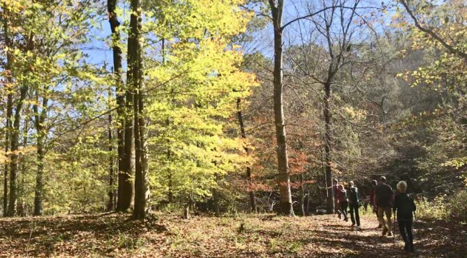 GetOut! And Enjoy the Fall-like Weekend