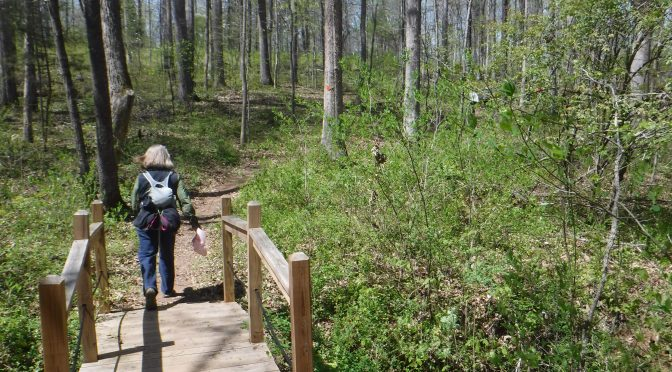 Twelve N.C. State Parks where you can still hike