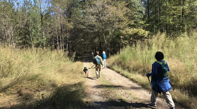 Trail etiquette Part II: Now, about your dog …