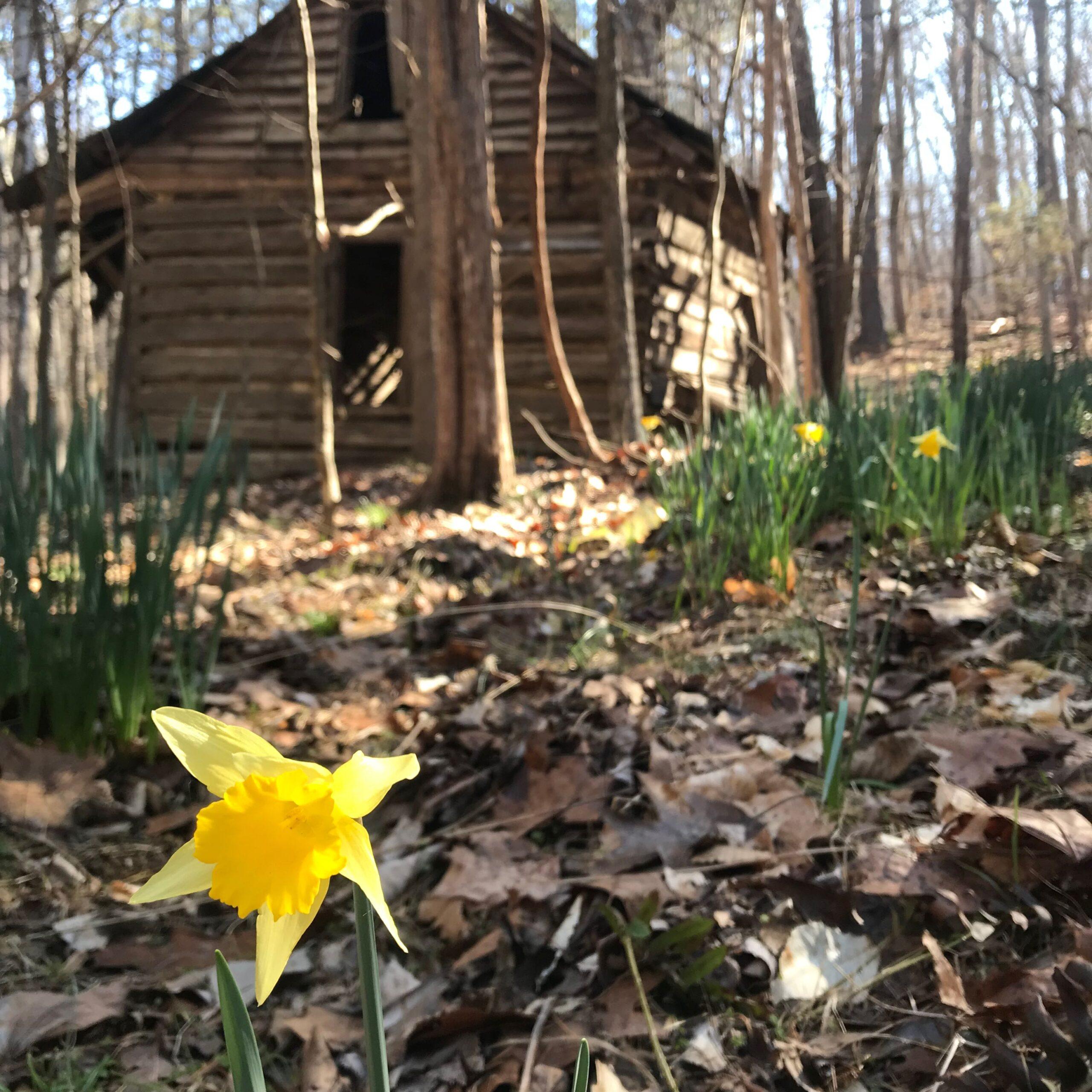 GetOut: Seek the Daffodil