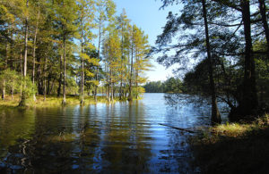 Carvers Creek: paddle a swamp
