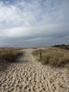 Basin Trail (photo courtesy Fort Fisher State Recreation Area)