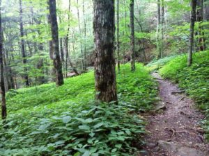 Profile Trail at Grandfather Mountain (photo courtesy N.C. State Parks)