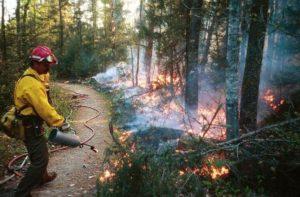 Prescribed burn in Panthertown Valley