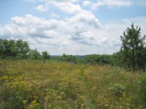 Little Long Mountain (photo courtesy The Land Trust for Central North Carolina)