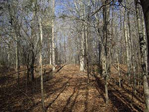 Bennetts Creek Trail at Merchants Millpond
